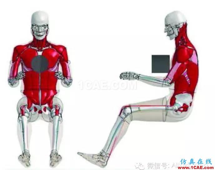 维克弗里斯特大学基于HyperWorks开发车辆碰撞仿真的人体模型hypermesh培训教程图片1