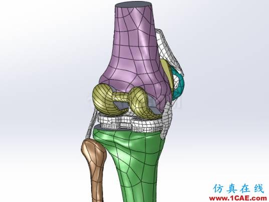 【医学应用】骨科知识和有限元分析ansys图片4