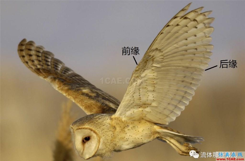 萌萌的猫头鹰背后的故事:寂静杀手让我们学到流体力学的秘密fluent培训的效果图片3